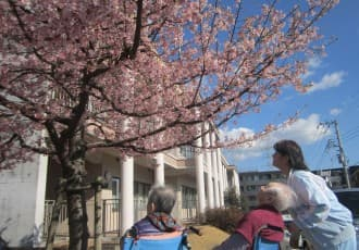 芙蓉苑自慢の河津桜が満開です!お花見イベントを開催しました!芙蓉苑では2月から3月にかけては『河津桜』、3月から4月にも『ソメイヨシノ』とお花見を長期間お楽しみいただけます。
