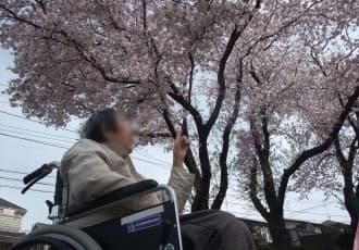 状態が安定されているご利用者は、いずみ芙蓉苑から車で数分の某公園まで「お花見」に出かけました。花壇の手入れが素晴らしく、パンジーやビオラも桜と同じく綺麗に咲いていました。