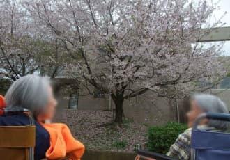 あるご利用者より、「桜」の時期にあった恋愛エピソードをお話しいただきました。また、古くから伝わる慣習や田舎のお花見ルールなど、お話しくださったご利用者の皆様、ありがとうございました。