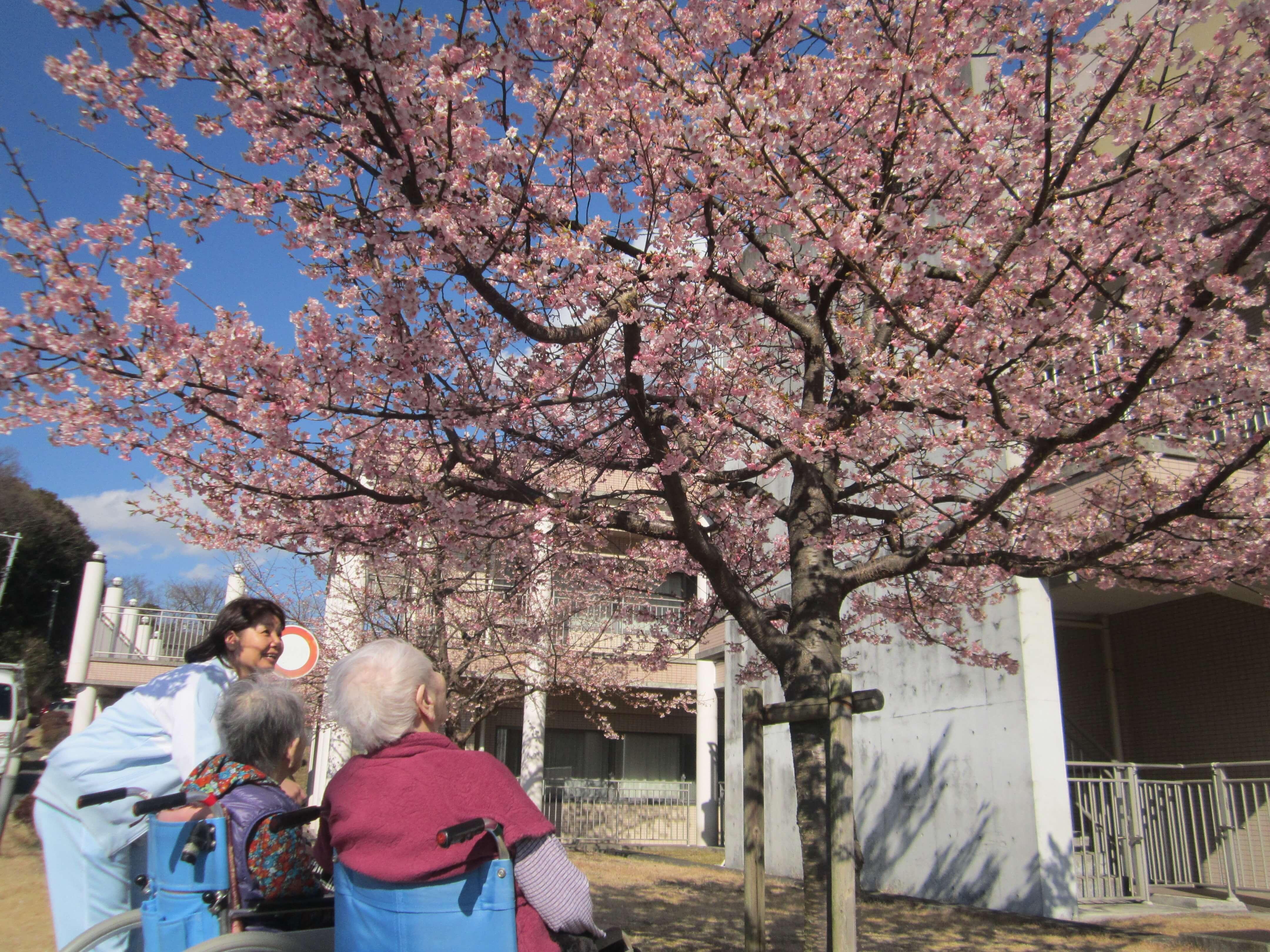 ポカポカと暖かい日にご入居者の皆さまとピンク色に咲き誇る桜を見て、ご入居者の笑顔も満開でした!私たちスタッフも皆さまの笑顔で心も温かくなりました。