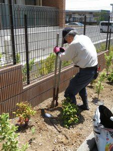 当日はお天気にも恵まれ、地域ボランティアの皆さまがプロ級の腕前で手際よくひまわりを植えてくださいました。